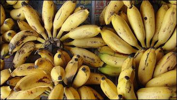 20120525-banana_cluster